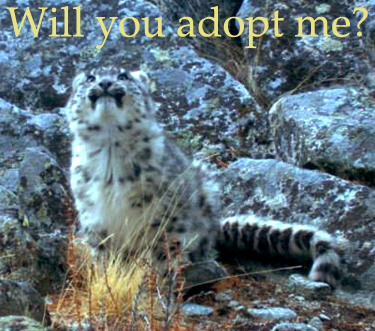 """cub with """"adopt me"""" in text"""